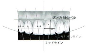 歯牙・歯列の分析