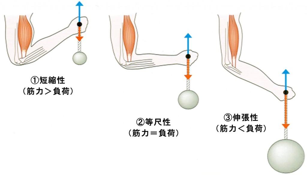 筋活動(上腕二頭筋)