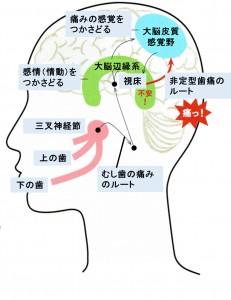 神経ネットワーク 痛覚と感情の関連性