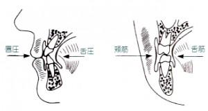 口腔周囲筋の協調・バランス1