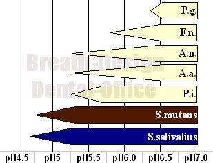 phと歯周病の関係