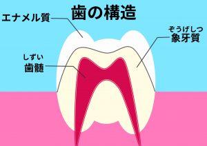 エナメル質と象牙質