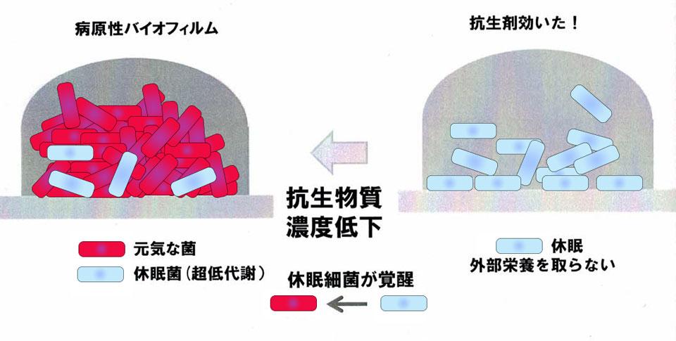 抗生剤の効き目2