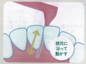 歯間ブラシの動かし方 その4