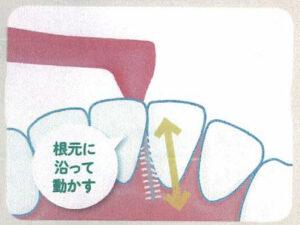 歯間ブラシの動かし方 その5